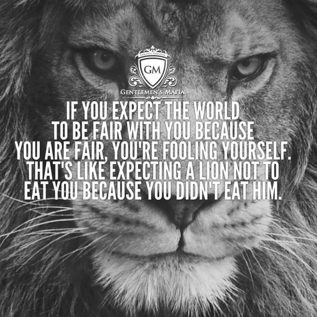 Wolves Don T Lose Sleep Over The Opinions Of Sheep And Lions Don T