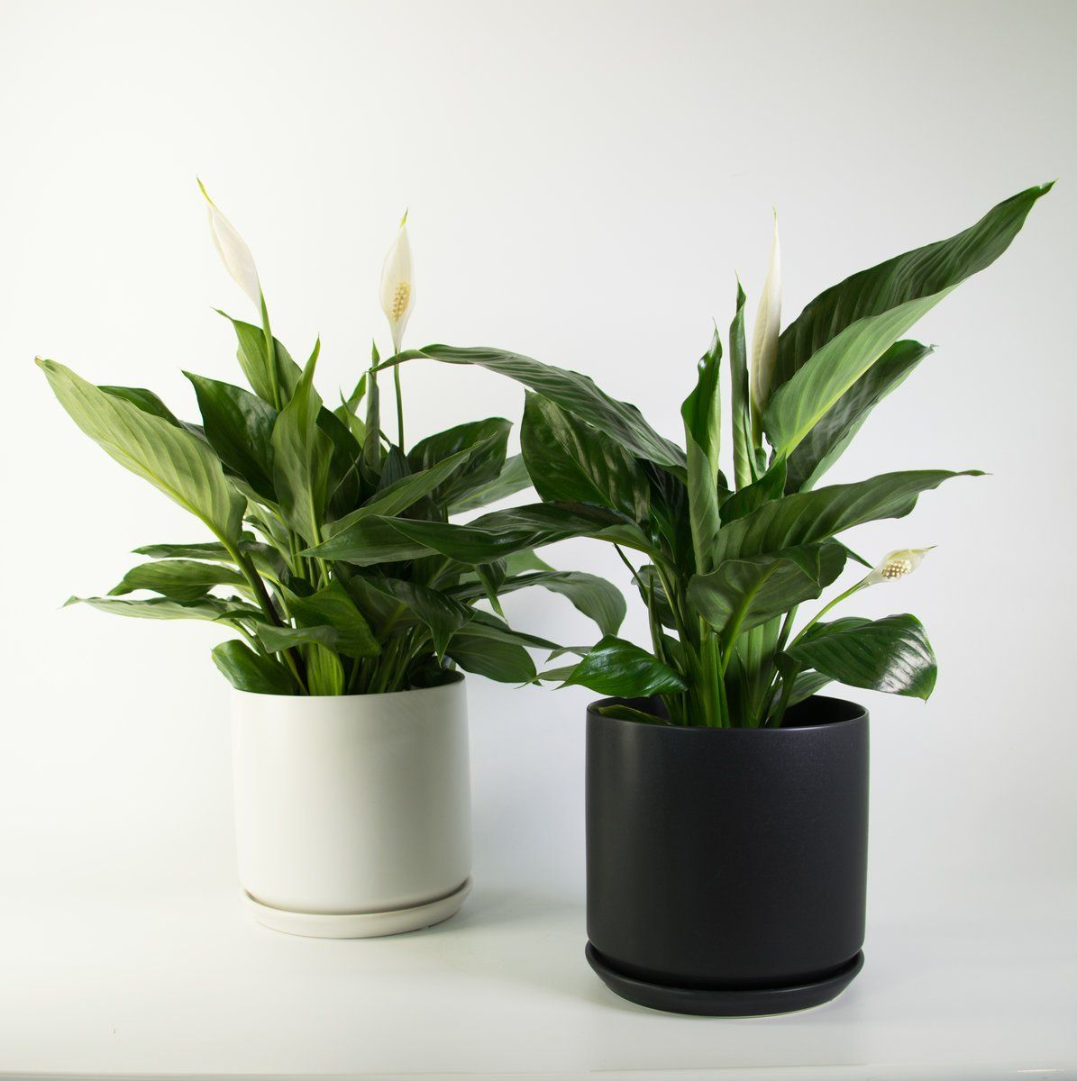 Best Bathroom Plants Nz – TRENDECORS