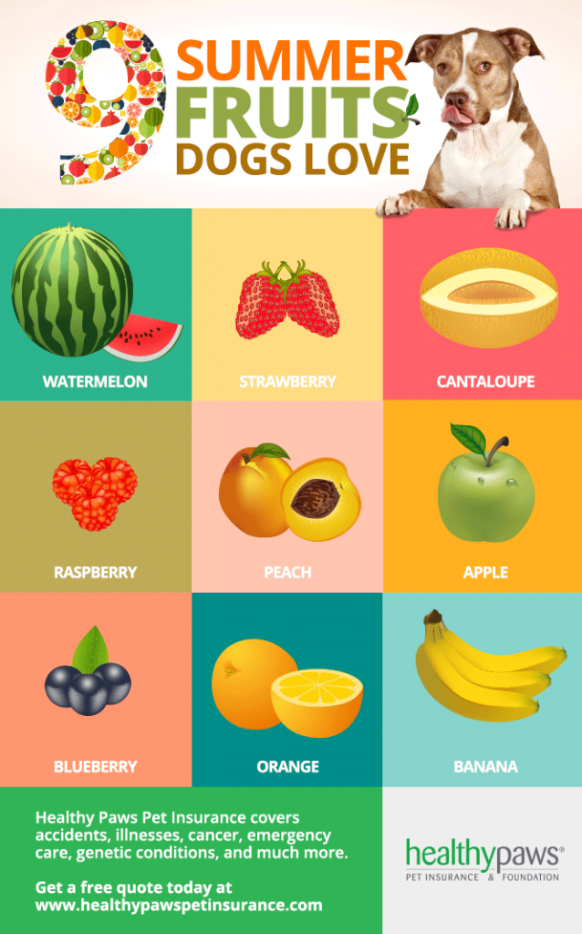 9 Summer Fruits Dogs Love Healthy Paws Fruit Dogs Can Eat Can Dogs Eat Strawberries Can Dogs Eat