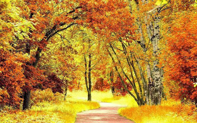 Herfst Wallpapers Herfstfotos Bureaublad Achtergronden
