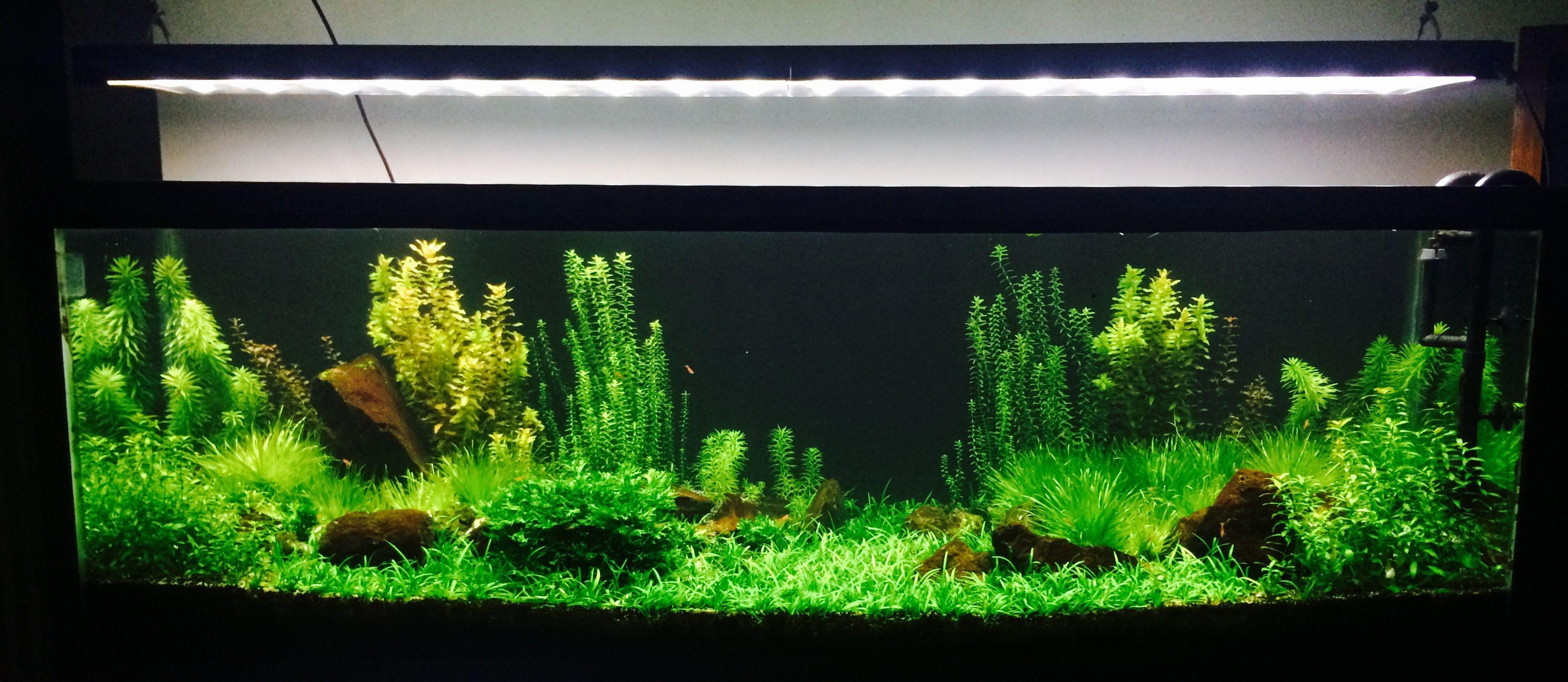 Pin by william cardona on aquascaping aquarium pinterest aquariums