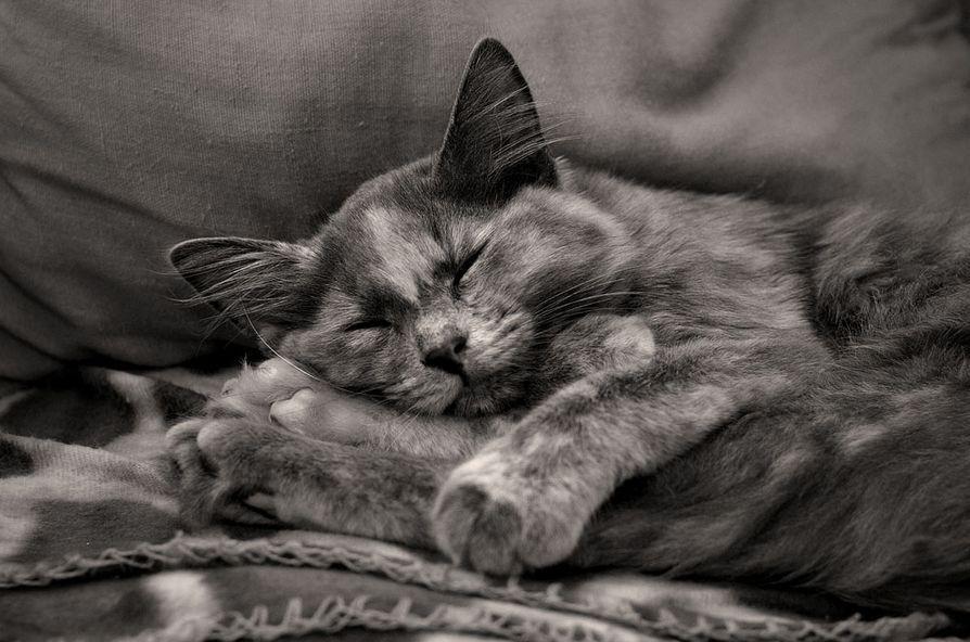 Cat nap. Cute baby bunnies, Cute animals, Cat nap