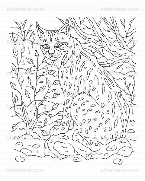 Wildcat Coloring Pages