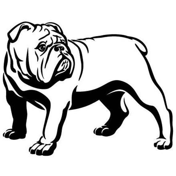 English Bulldog 7 American Mascot Head Spiked Collar Dog Breed K