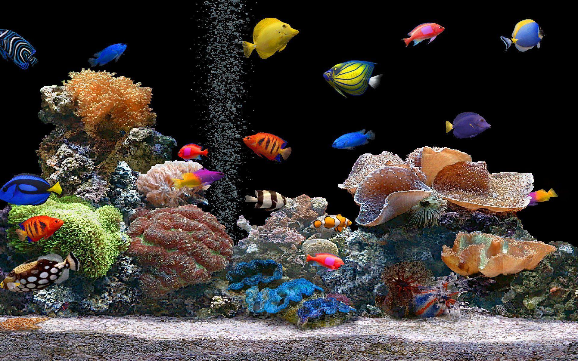 Fonds d 39 cran aquarium aquarium for Fond ecran aquarium