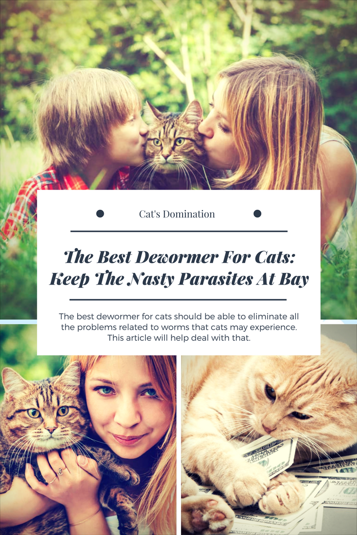 3 Best Cat Dewormers For All Worms Cats, Cat travel