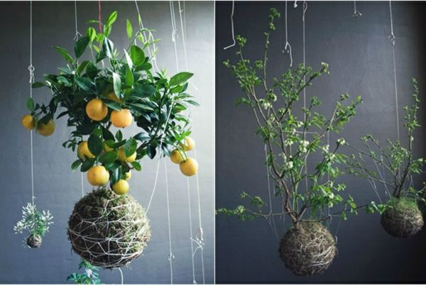aufh ngen balkon coole ideen zimmerpflanzen pflegen garten und blumen pinterest bonsai. Black Bedroom Furniture Sets. Home Design Ideas