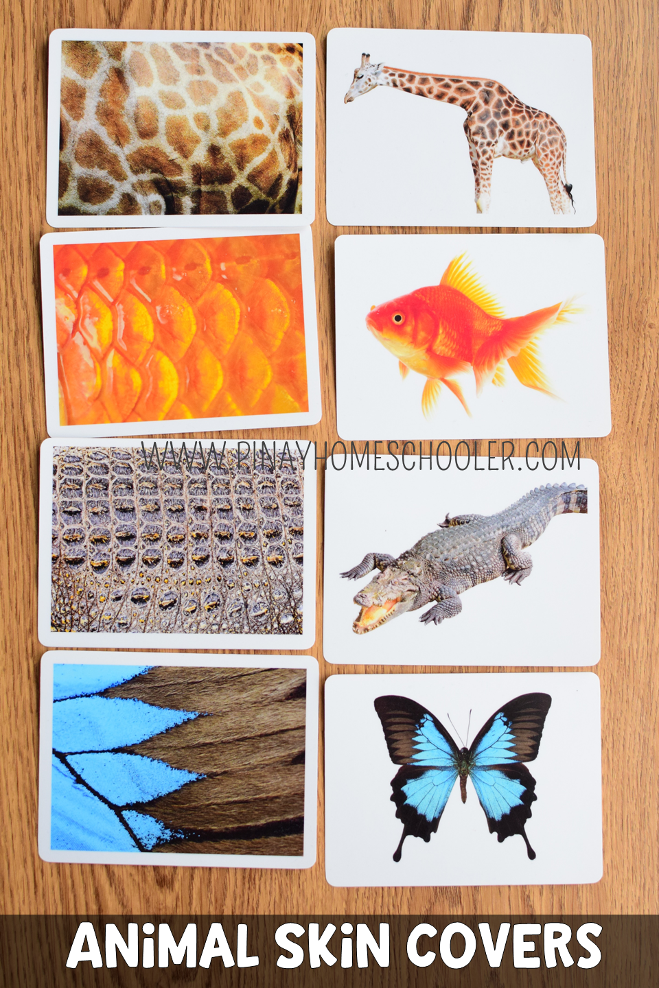 This Is A Montessori Inspired Learning Material Used Mainly For Learning About The Different Skin Animal Co Animal Coverings Animal Print Wallpaper Animal Skin
