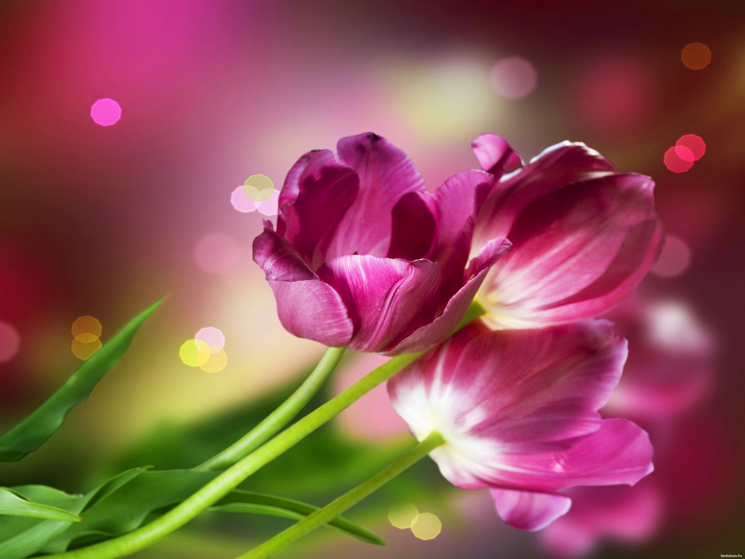 Collection of beautiful flowers forestwonders flowers collection of beautiful flowers forestwonders dhlflorist Images