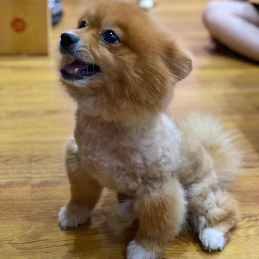 I Got A Furcut Do You Guys Still Recognize Me Bentothedog In 2020 Pets Dogs Animals