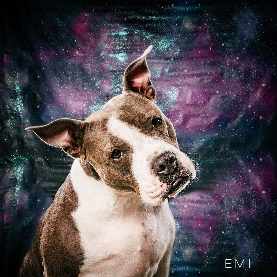 02 13 17 Houston Robyn Arouty My Pouty Lips Are Hypnotic Proceed With Caution Emi Is Available For Adoption Thr Texas Adopt Foster Sponsor Me Anima