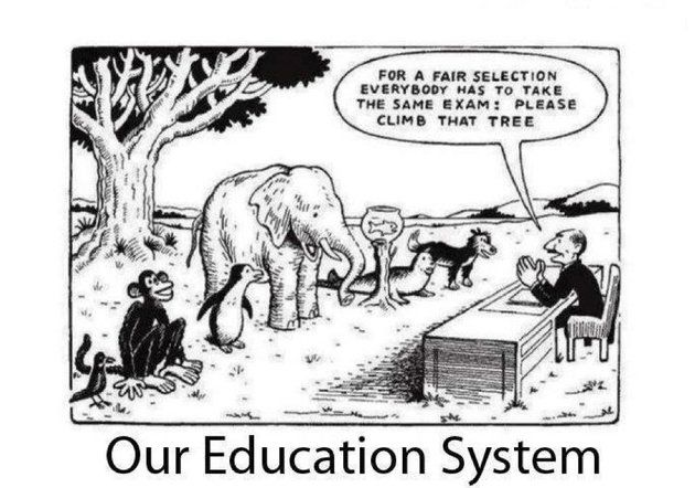 Image result for education system cartoons