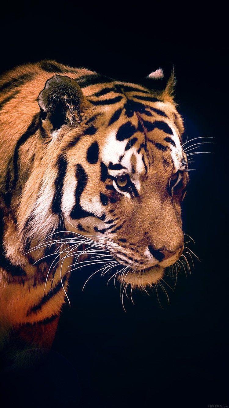 Tiger Dark Animal Love Nature Wallpaper Hd Iphone Tiger Wallpaper Iphone Nature Iphone Wallpaper Tiger Wallpaper