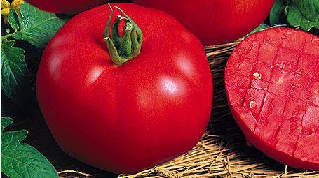 Tomaten Pflanzen Garten Garten Ideen Und Gemüsegarten