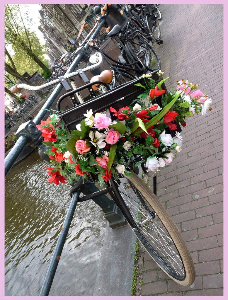 velofleuramsterdam.jpg Beautiful bicycle, Baby