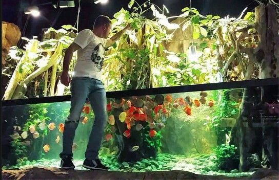 Aquário amazonico