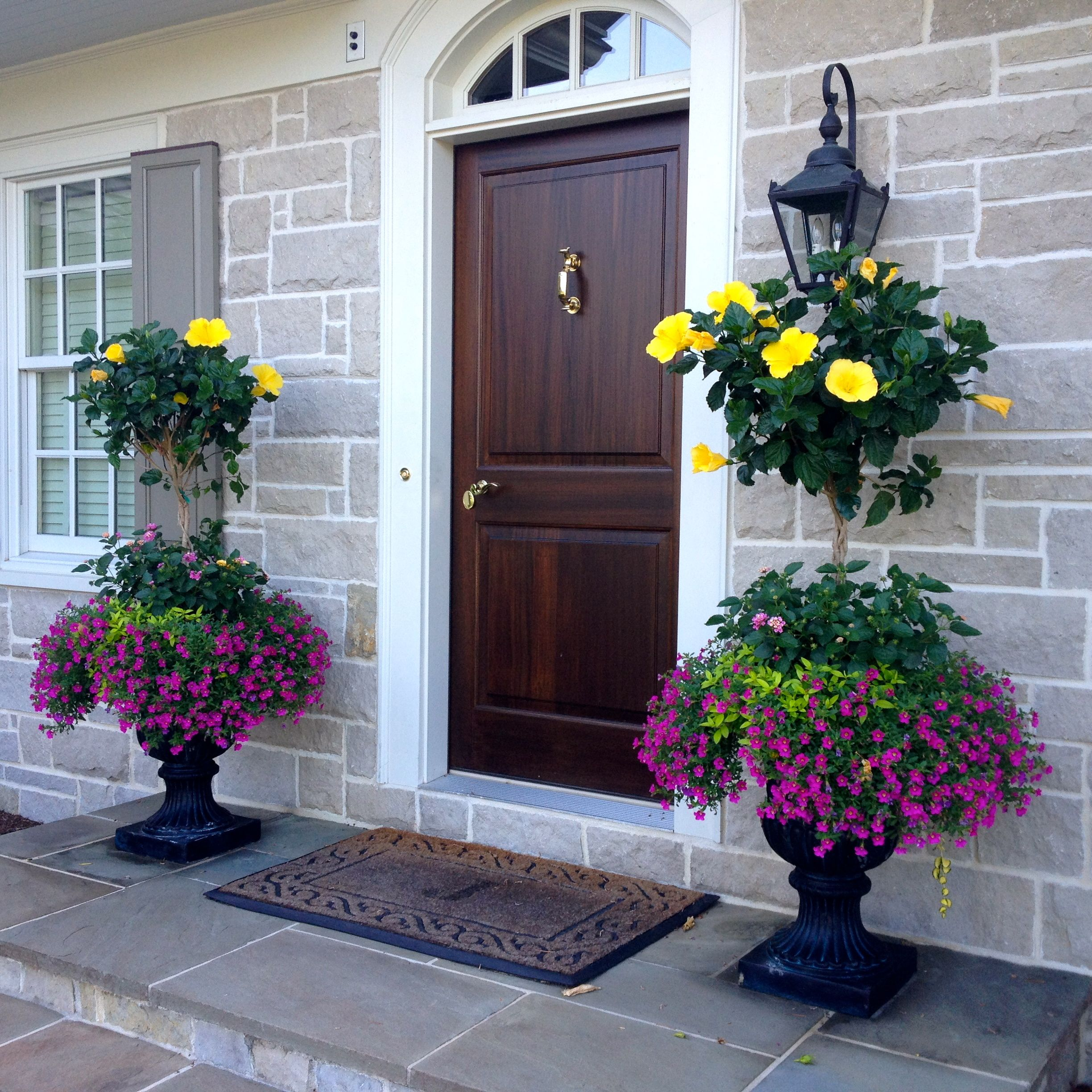 Hibiscus planters hisbiscus container garden ideas for Potted plants by front door