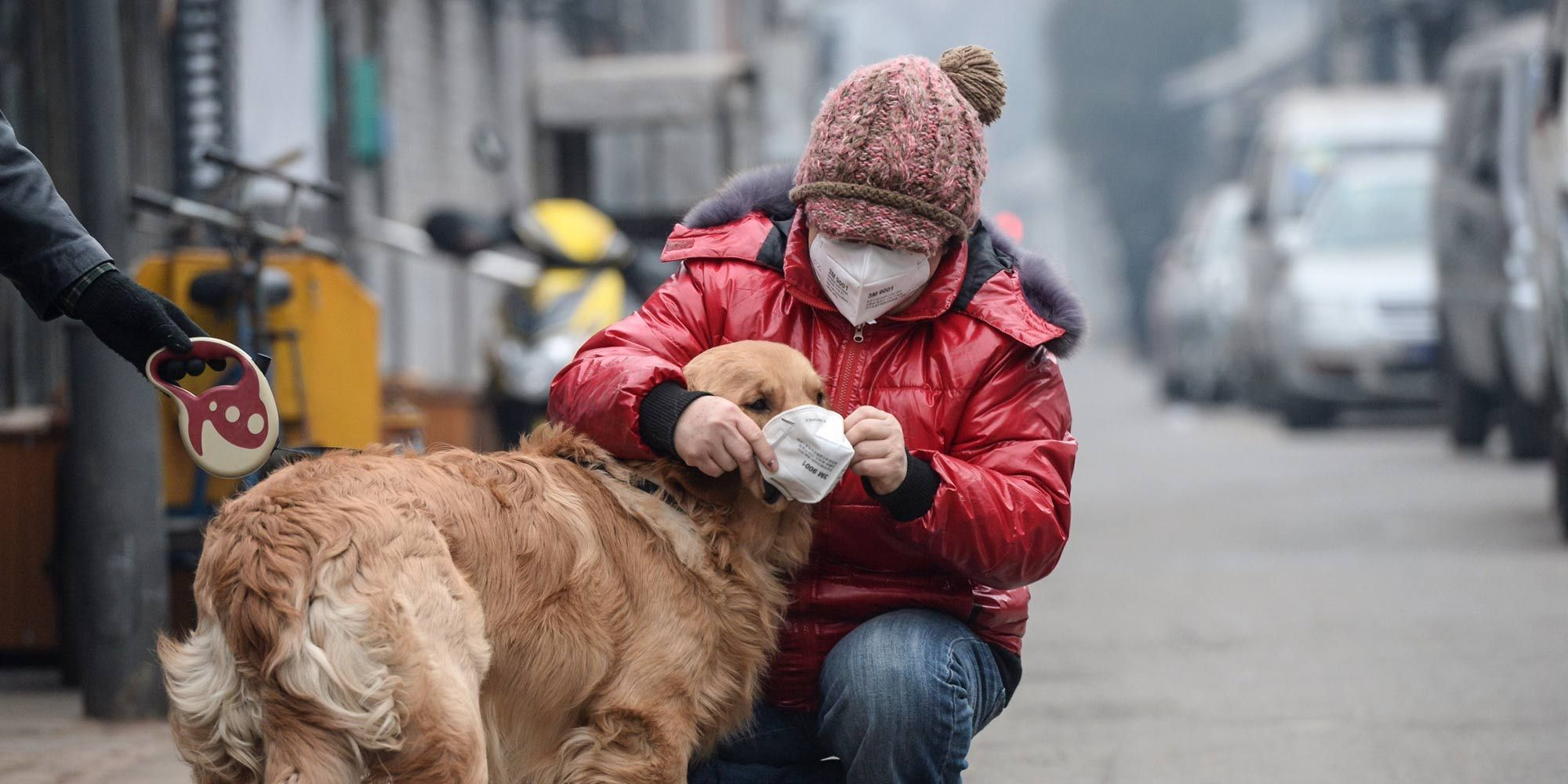 Image result for pets air pollution