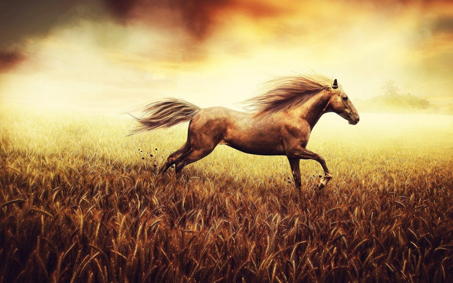 Beautiful Horse.....