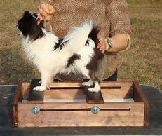 Image Result For Dog Stacking Training Box