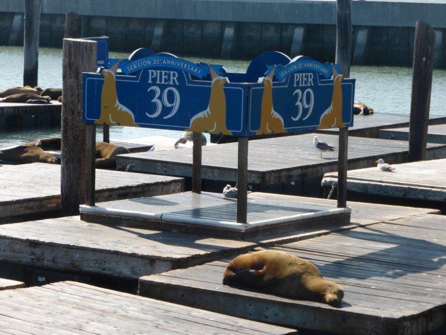 Pier 39. Read on at www.thegoodwolfmanifesto.com
