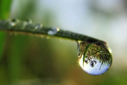 Reflection in a water droplet..
