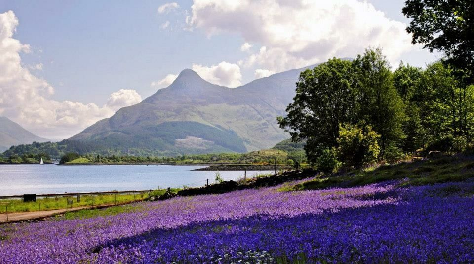 Pin by Jill Francis on Scotland the Brave Natural