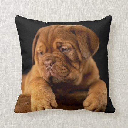 Dogue de Bordeaux French Mastiff Puppy Dog Throw Pillow