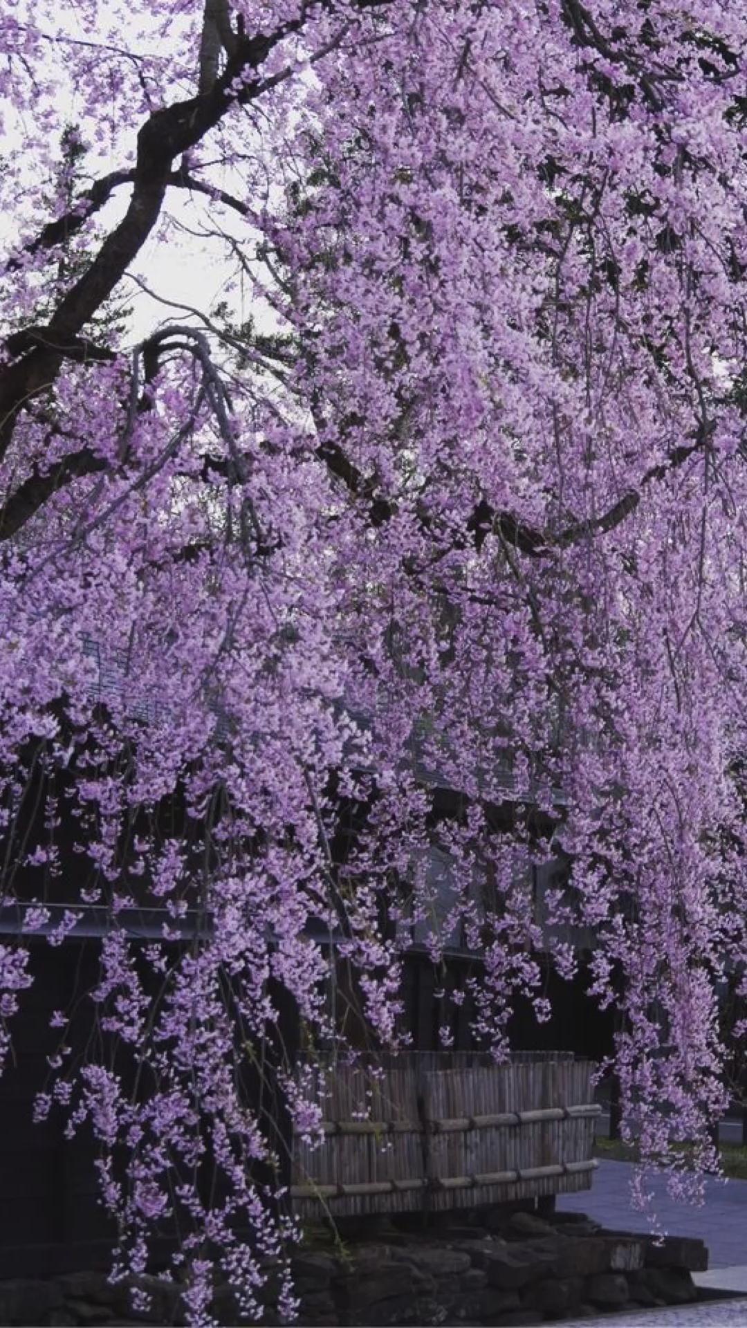 A Lavender Dream 👾