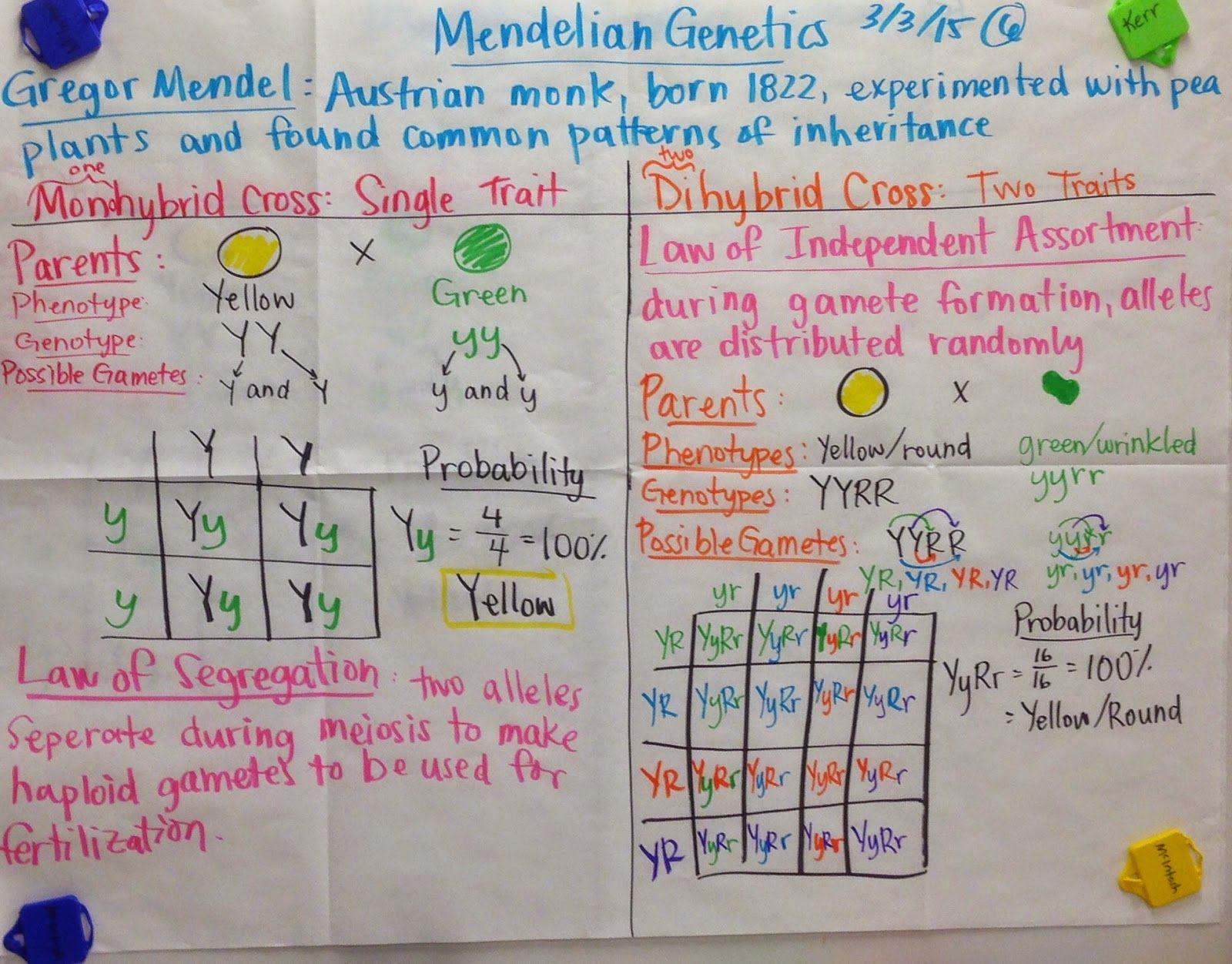 Punnett Squares Dihybrid Crosses Mendelian Genetics