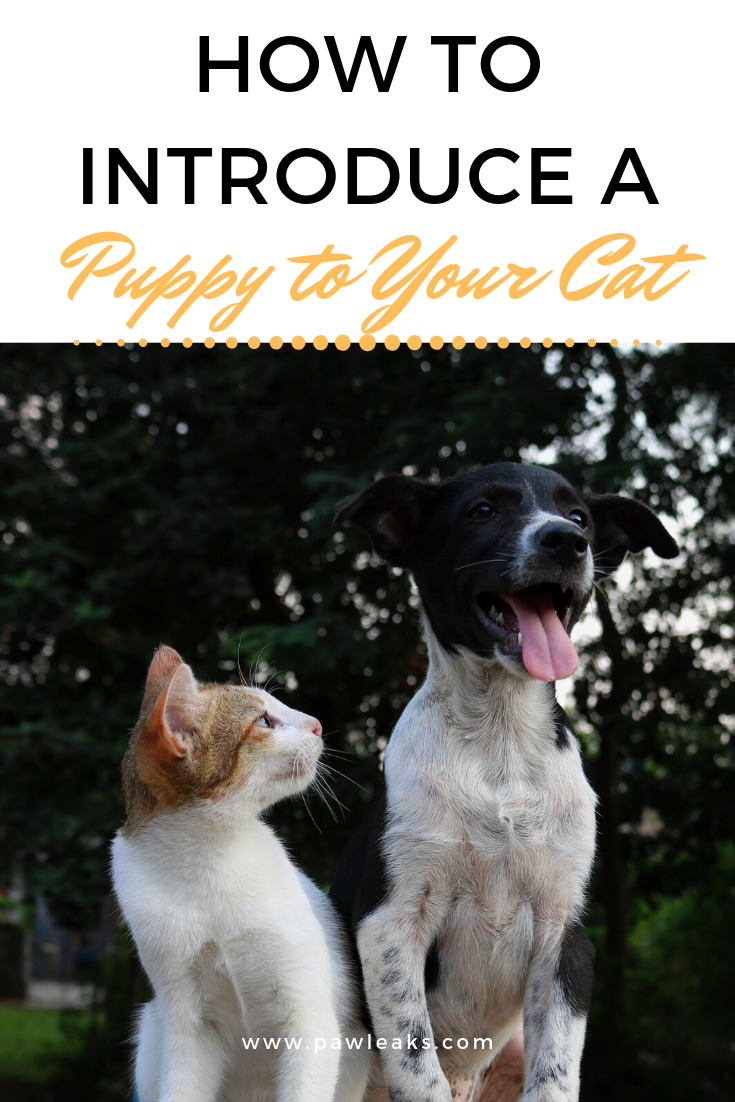 How to Introduce a New Puppy to Your Cat Cats, Puppies