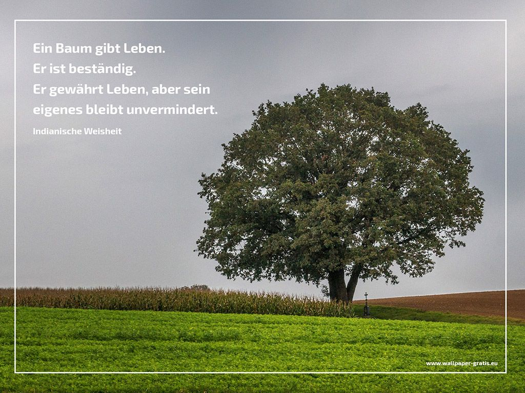 Baum Sprüche