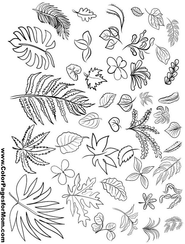 Leaves Coloring Page 24 Leaf Coloring Coloring Pages Pattern