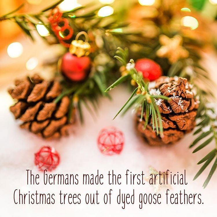 Did You Know Auroville Christmasfact Facts Funfacts Christmastree Tree German Tradition Simple Christmas Decor Christmas Decorations Simple Christmas