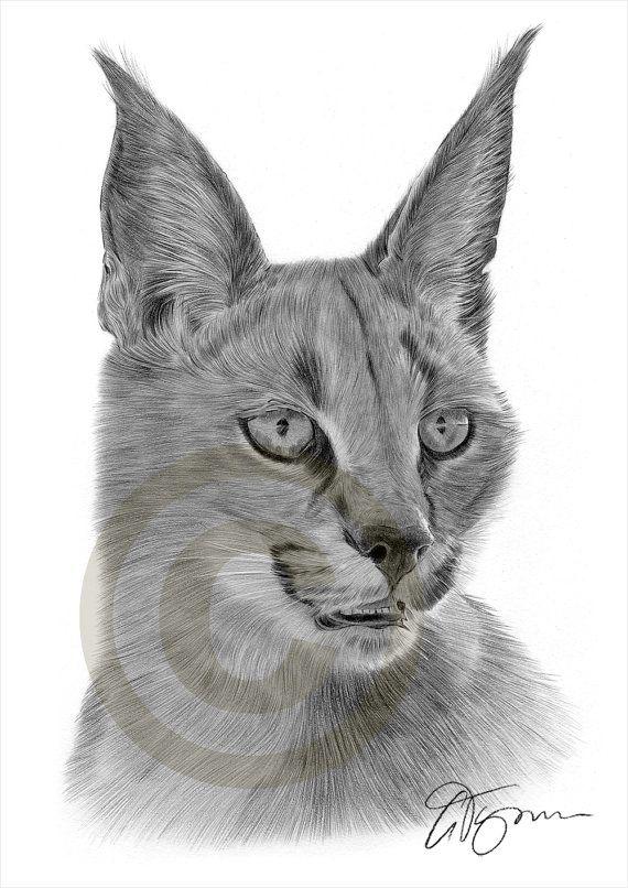 Animal artwork Caracal pencil drawing print artwork