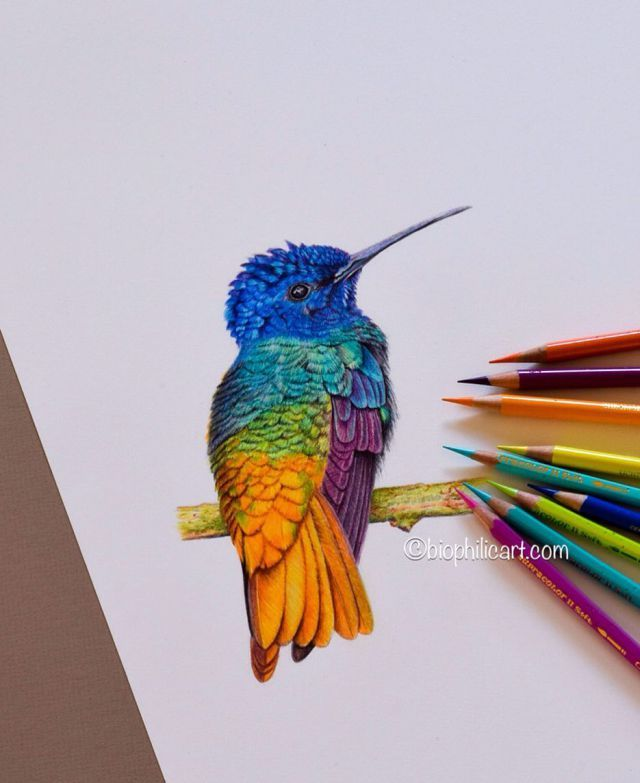 Beautiful Eye Catching Colorful Wildlife Drawing By Sallyann