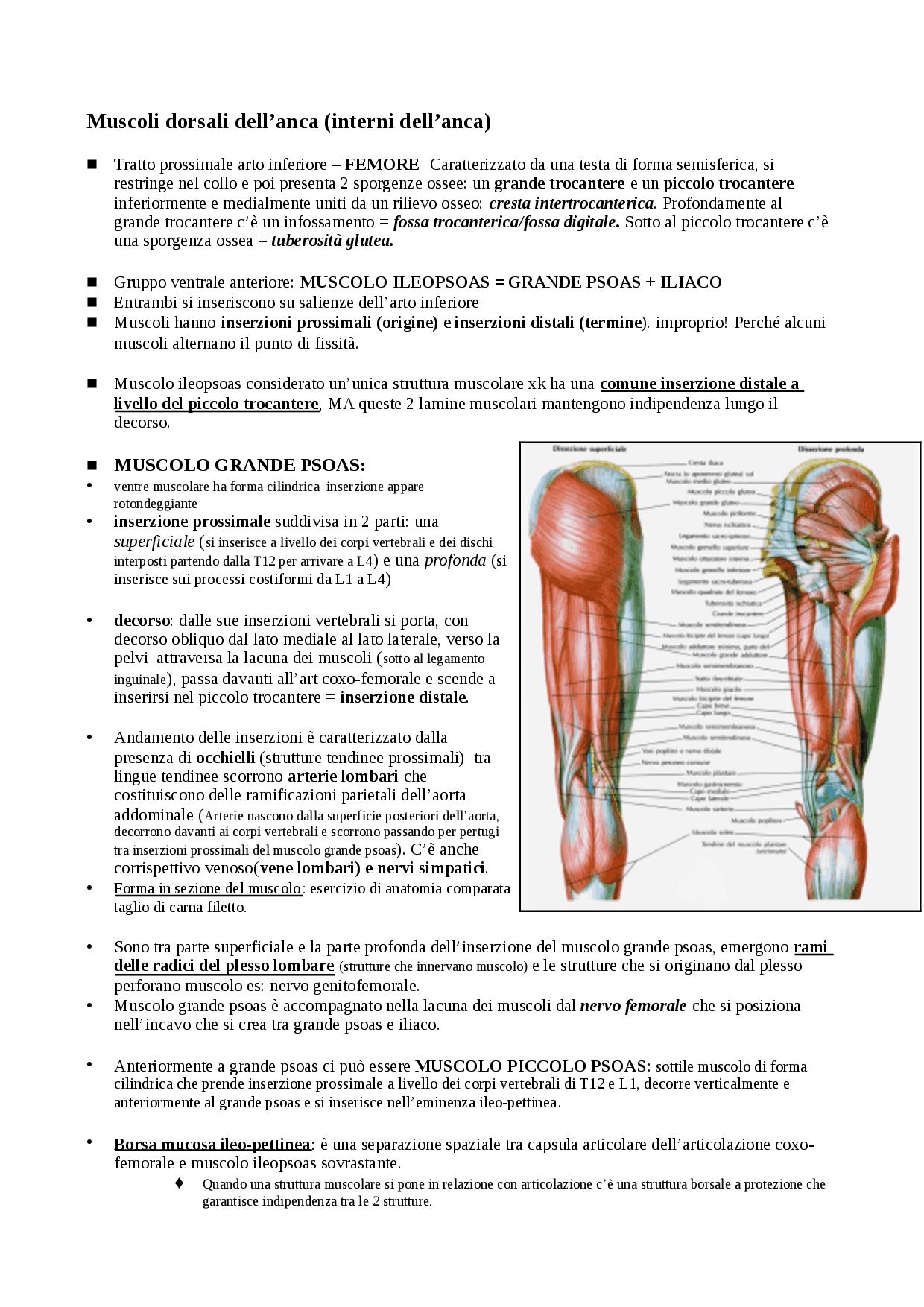 Fein Zerebralen Hemisphären Anatomie Fotos - Anatomie Ideen ...