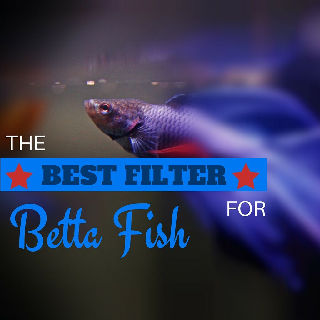 5 of the best filter for betta fish review betta fish for Filter for betta fish