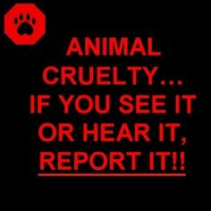stop cruelty to animals - Google Search