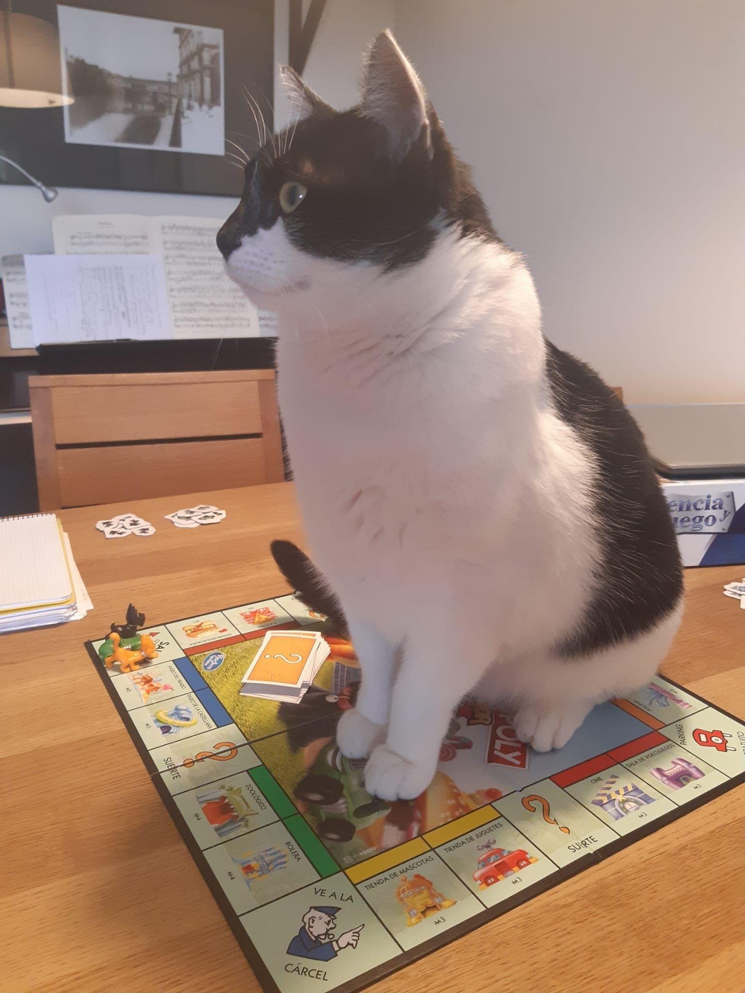 Pin En Katzen Chats Gatti Gats