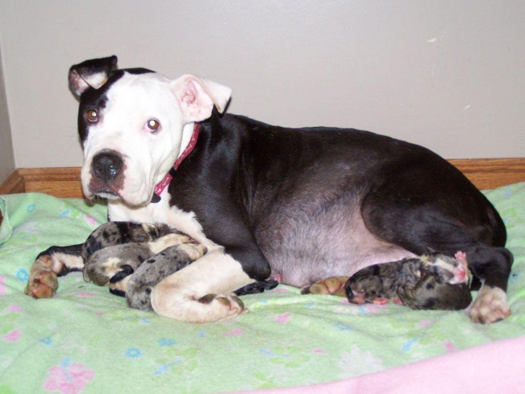 Adopt Lena on Help homeless pets, Dog adoption, Pet adoption