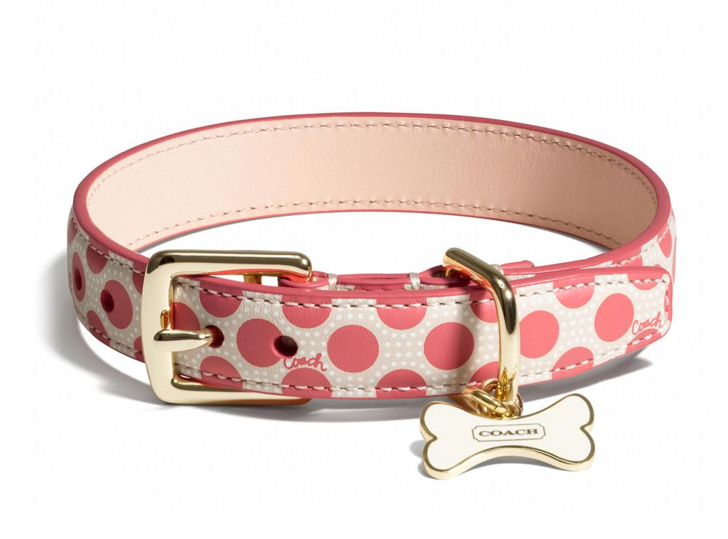 Coach Poppy Polka Dot Collar From Pet Gift Guide 2013 E Online