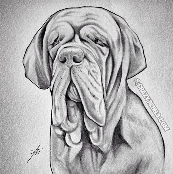 Hand Drawn Portraits Dog Sketch Dog Portraits Neopolitan Mastiff