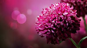 PINK FLOWERS - Buscar con Google