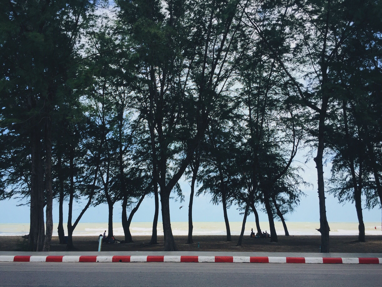 #FreeToEdit #sea #trees #photography #photostory #beach