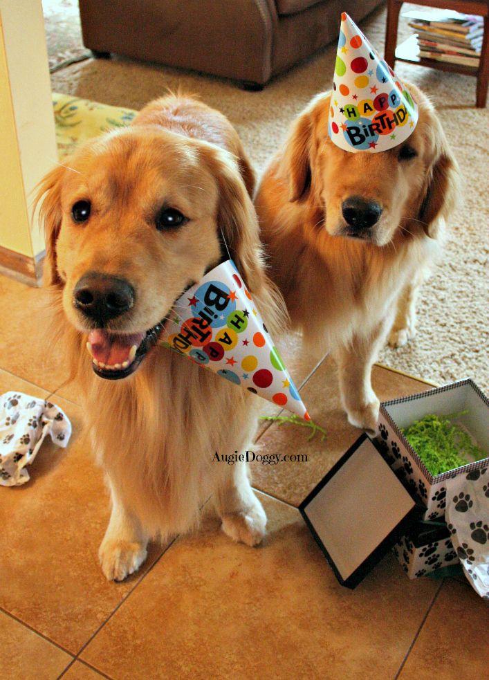 We Re Ready To Party Golden Retriever Birthday Golden