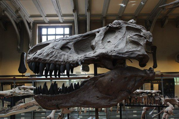 Музей палеонтологии в Париже.