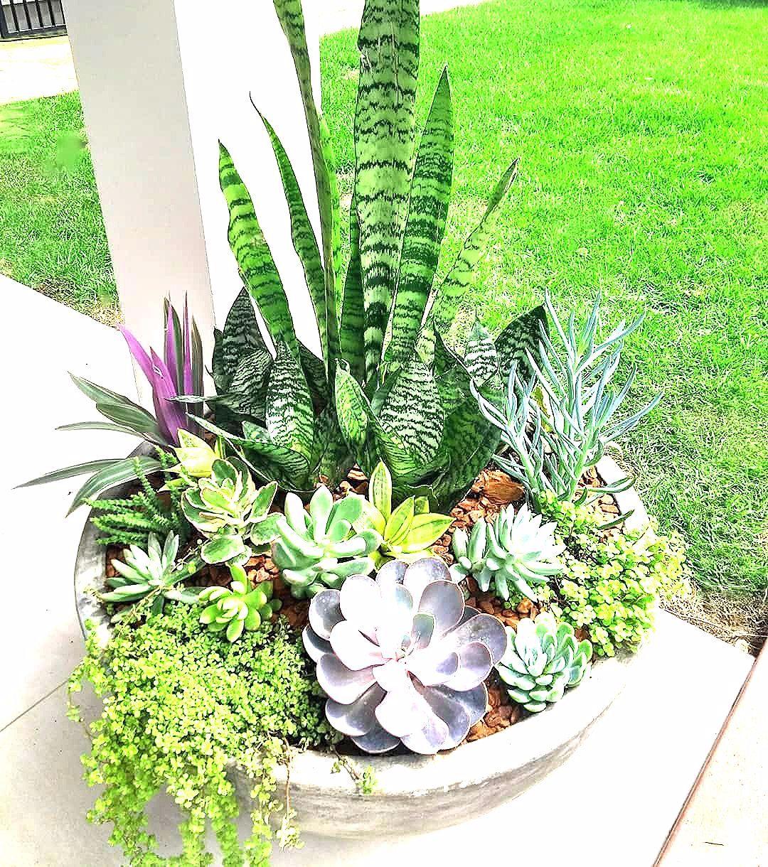 Photo of Gartengestaltung Olivra Homedecor auf Instagram quotSukkulente Außenanlage Brauchen Sie diese in