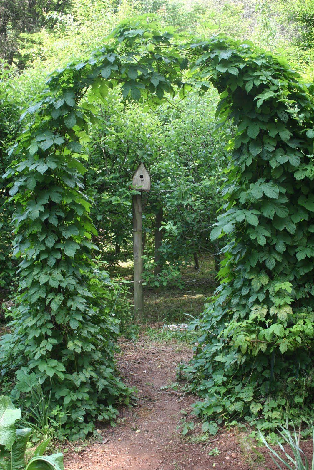 Garden arch of hops garden arches garden features