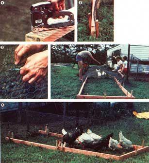 Run, Chicken, Run: Building a Chicken Run | Urban farm ...